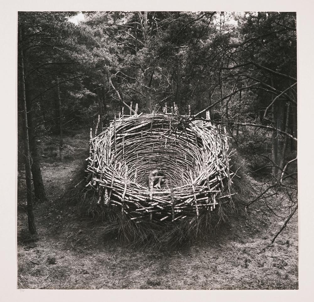 Nils udo_das Nest-1_s